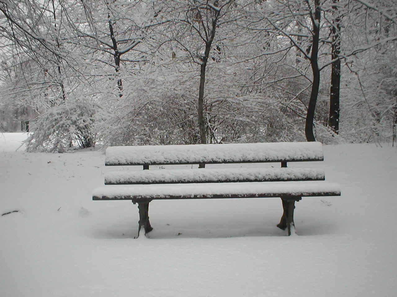 Winter im gro en garten - Winterliche bilder kostenlos ...